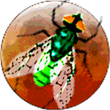 Galactic Insects juego casual gratuito